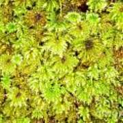 Tender Fresh Green Moss Background Texture Pattern Art Print