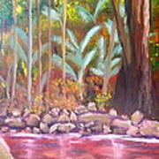 Terania Creek Art Print
