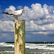 Tern On A Piling Art Print