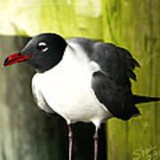 Tern Art Print