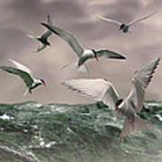 Terns Feasting At Sea Art Print