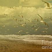 Terns In The Clouds Art Print