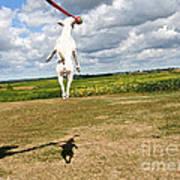 Terrier Ball Ballet Art Print