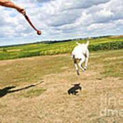 Terrier Levitation Art Print