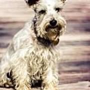 Terrier On Deck Art Print