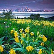 Teton Spring Wildflowers Print by Jerry Patterson