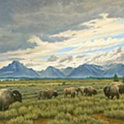 Tetons-buffalo  Art Print