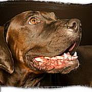 Tex The Dog Art Print