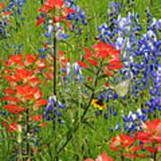 Texas Best Wildflowers Art Print