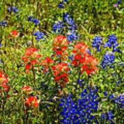 Texas Bluebonnets And Red Indian Paintbrush Art Print