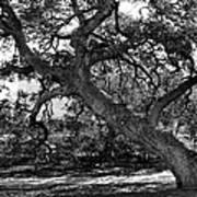Texas Capitol Tree Art Print