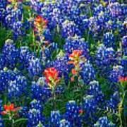 Texas Colors Art Print