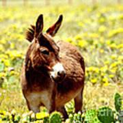 Texas Donkey In Yellow Cacti Art Print