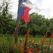 Texas Glory Art Print
