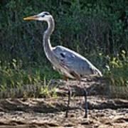 Texas Coastal Birds Art Print
