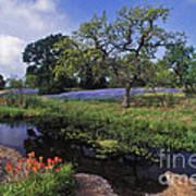 Texas Hill Country - Fs000056 Art Print