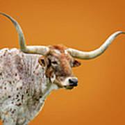 Texas Longhorn Steer Art Print