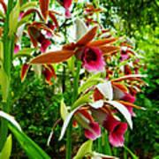 Texas Orchids Art Print