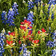 Texas Spring Art Print