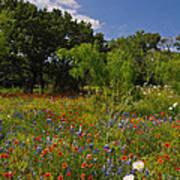 Texas Spring Spectacular Art Print