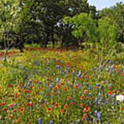 Texas Wildflower Medley Art Print