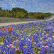 Texas Wildflowers Images - Bluebonnets 2 Art Print