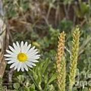 Texas Wildflowers V5 Art Print