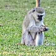 Texting Monkey Art Print