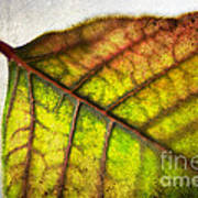 Textured Leaf Abstract Art Print