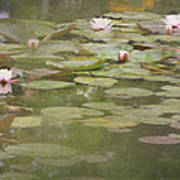Textured Lilies Image  Art Print