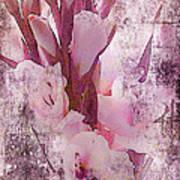 Textured Pink Gladiolas Art Print