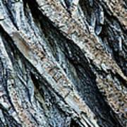 Textured Tree Bark Art Print