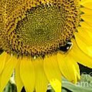 Thank God For Sunflowers Art Print