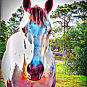 That Horses Face Art Print