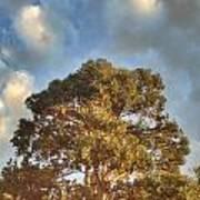 That Peaceful Tree Again Art Print