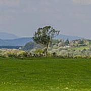 Thatched Roof - County Mayo Ireland Art Print