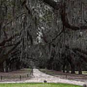 The 99 Oak Trees Art Print