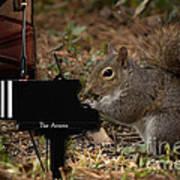 The Acorn's Pianist Art Print