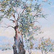 The Ancient Gum Tree Art Print