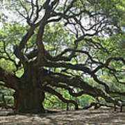 The Angel Oak Art Print