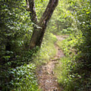 The Appalachian Trail Art Print by Debra and Dave Vanderlaan