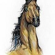 The Bay Arabian Horse 13 Art Print