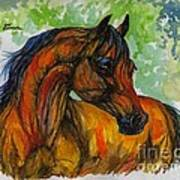 The Bay Arabian Horse 3 Art Print