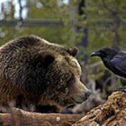 The Bear And Crow Art Print