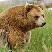 The Bear Dry Brushed Art Print