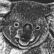 The Bear From Down Under Art Print