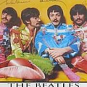 The Beatles Art Print by Donna Wilson