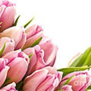 The Beautiful Purple Tulips Art Print by Boon Mee