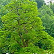 The Beauty Of A Tree Art Print