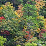 The Beauty Of Autumn Art Print